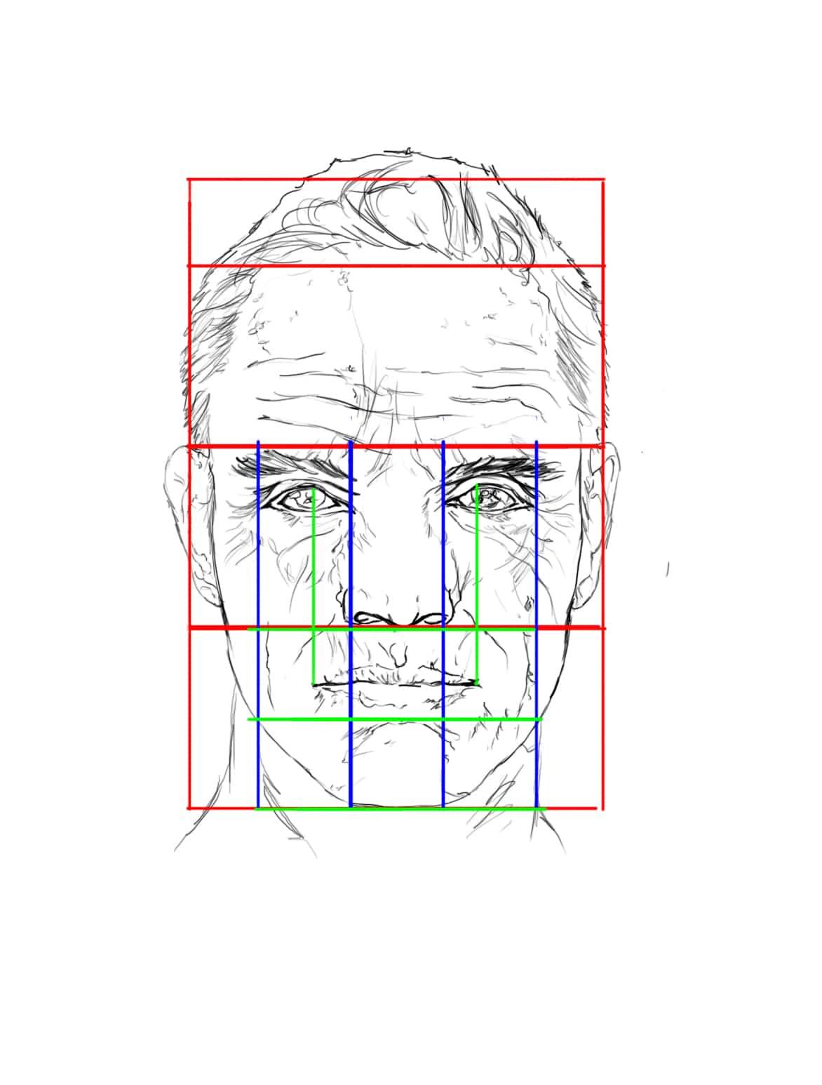Les proportions de la tête