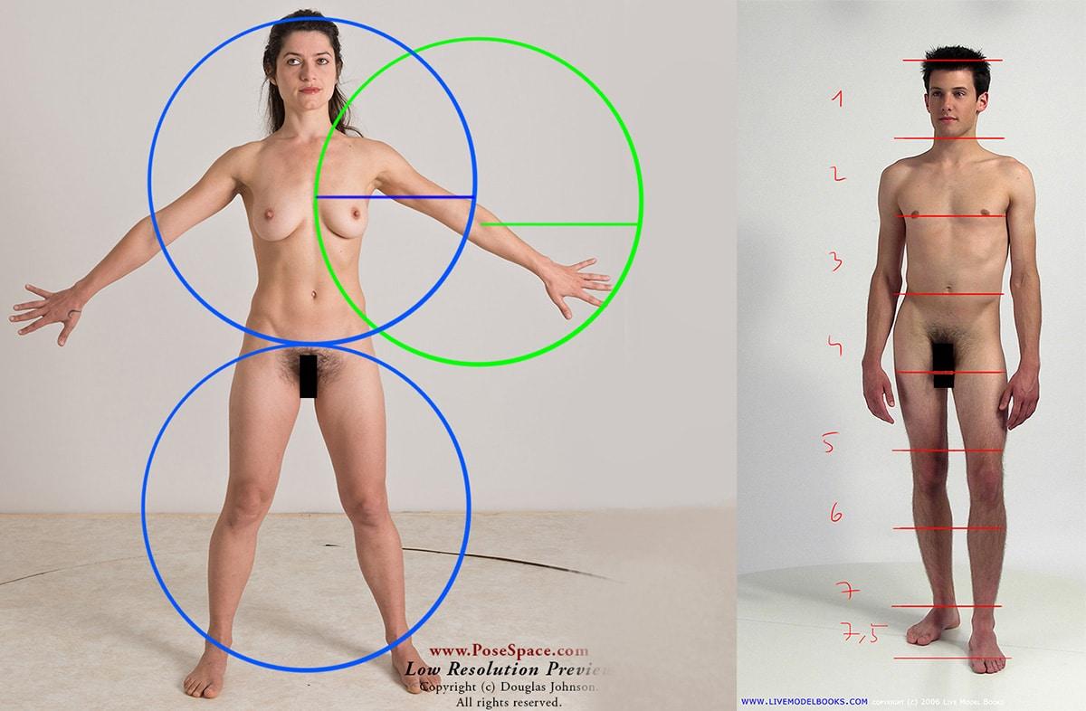 Les proportions du corps humain